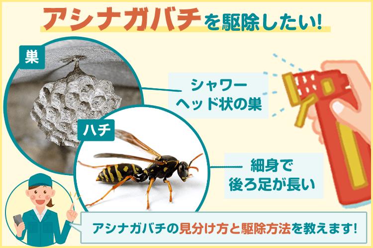 アシナガバチ に 刺され る